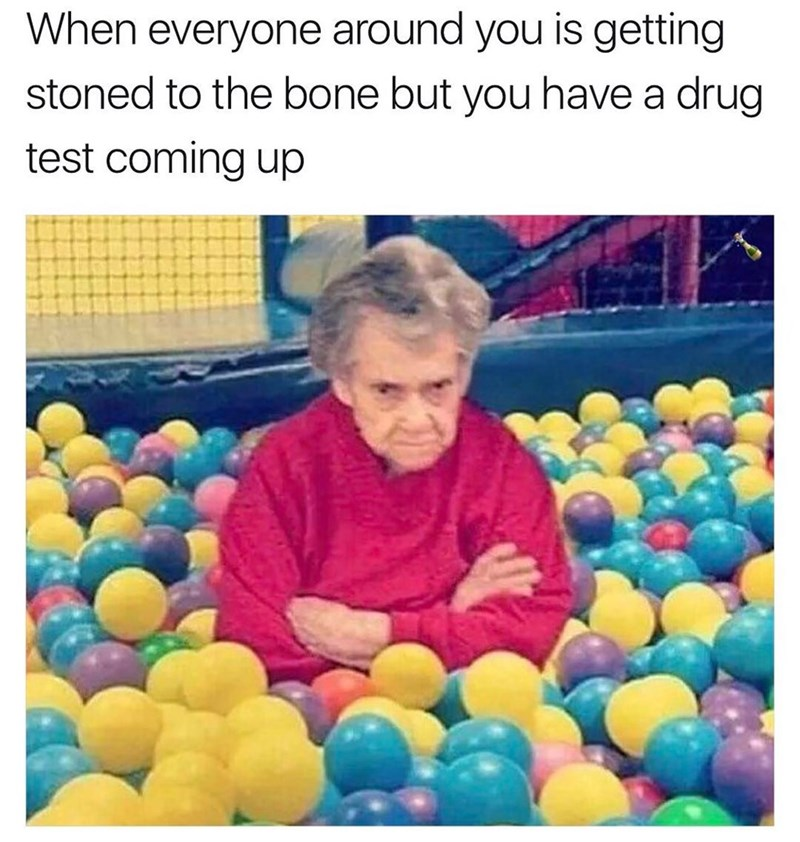 grumpy grandma meme about when everyone is getting stoned but you have a drug test coming up