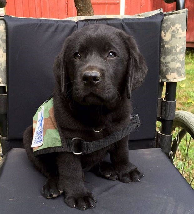 Cutest police dog puppy ever.