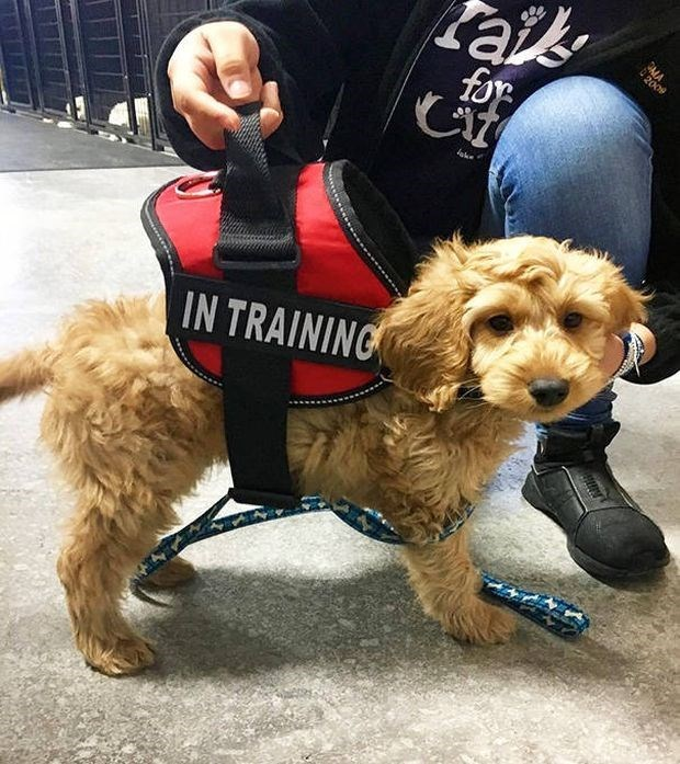 Fluffy puppy in training.
