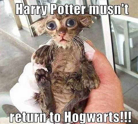 Harry Potter meme because the wet cat looks like something out of one of those books.