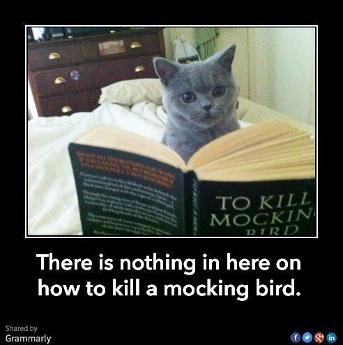 Cat reading To Kill A Mockingbird with disappointment.