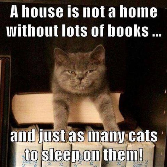 Cat meme about books