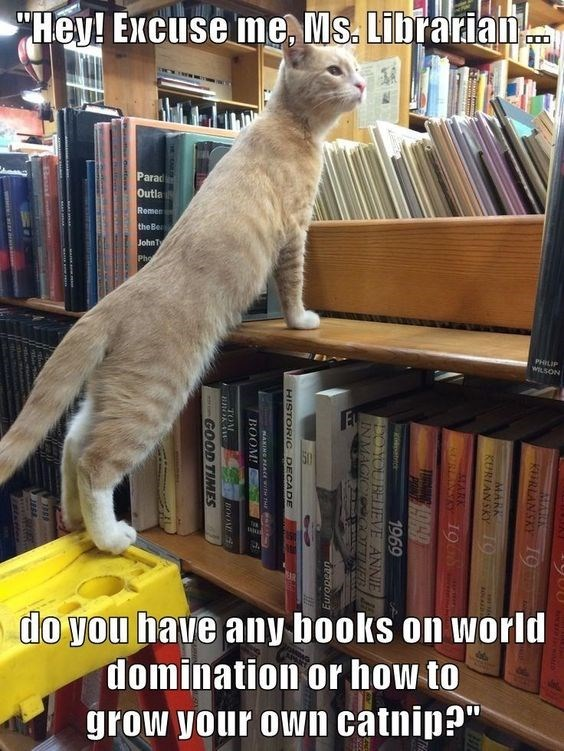 Cat at the library