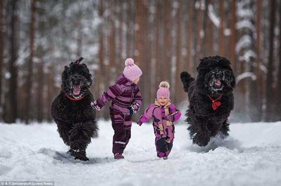 Two purple kids with two large black dogs running through the snow in the woods.