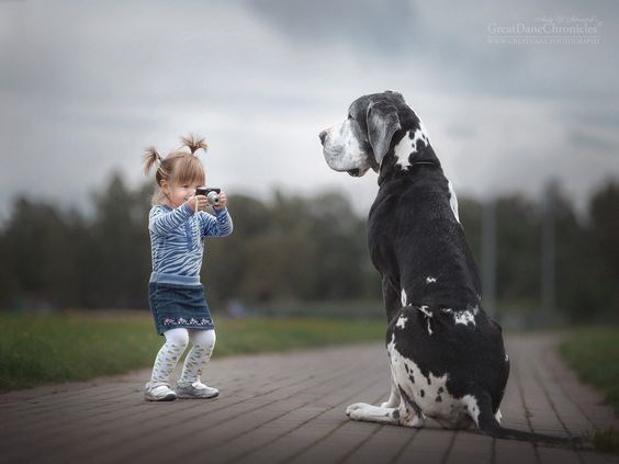 Cute kid with pigtails taking a picture of amazing Great Dane along brick path in outdoors setting.
