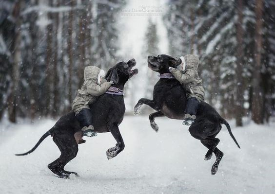 Twins riding twin black dogs as they charge into the falling snow in the forest.