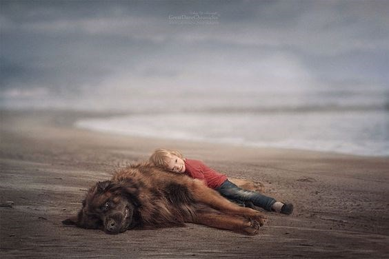 Kid sleeping on a huge dog along the sand of the beach.