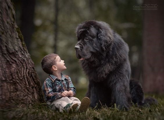 Kid and large fluffy black dog have a heart to heart next to old tree in the forest woods.