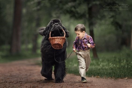 Dog and kid carrying large wicker basket through the forrest