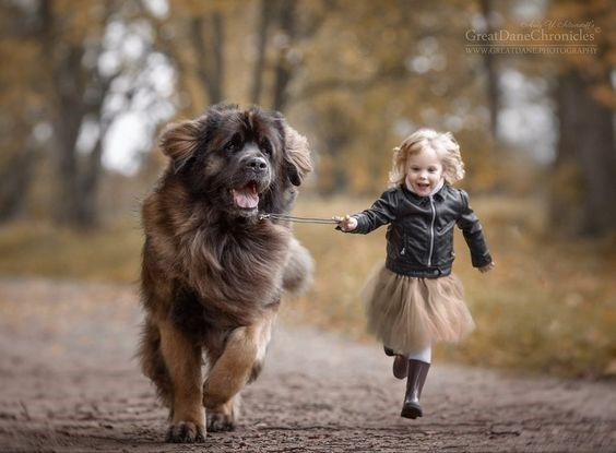 Blonde girl running happily with a very large dog.
