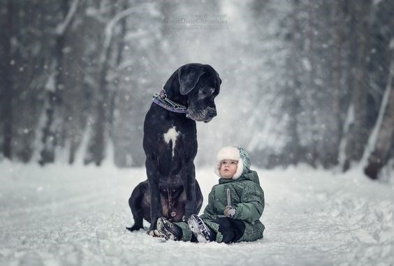 Little kid and massive Great Dane dog sitting in the falling snow.