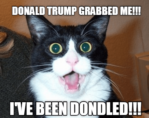 Funny cat meme of a cat claiming that he was grabbed by Donald Trump, in reference to a famous recording many of his political opponents disliked.
