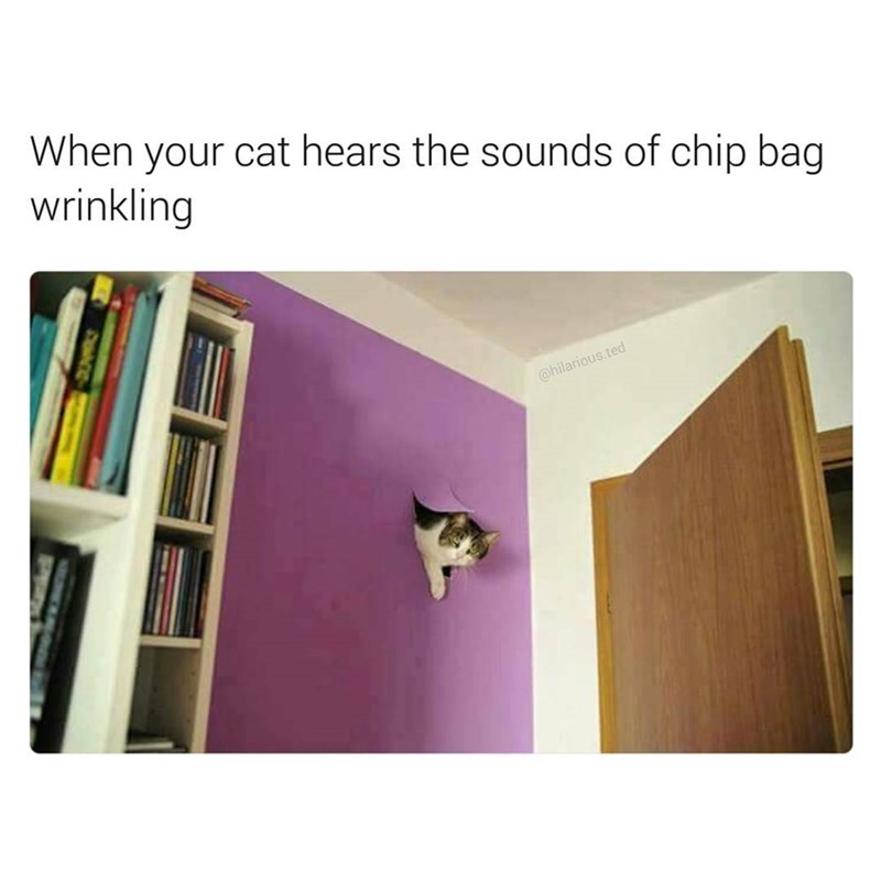 Cat coming through wall when it hears the sound of a chip bag crinkling.