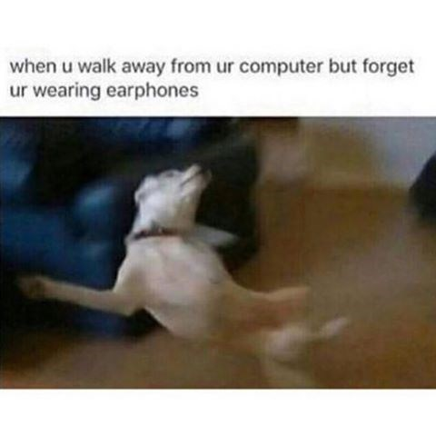 When you walk away from your computer while you're still wearing headphones. Image of dog freaking out.