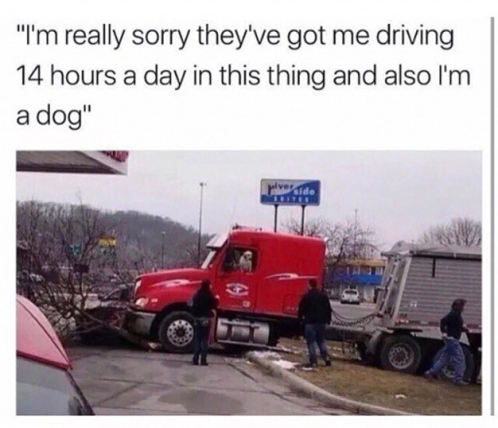 A tractor trailer truck has crashed and a dog is the driver.