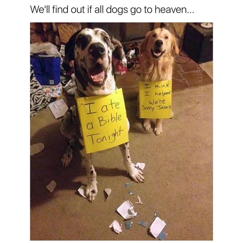 Dogs ate bibles, please forgive them jesus, will they go to heaven?