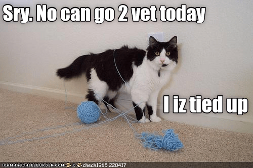 cat tied up vet caption no - 9028805632