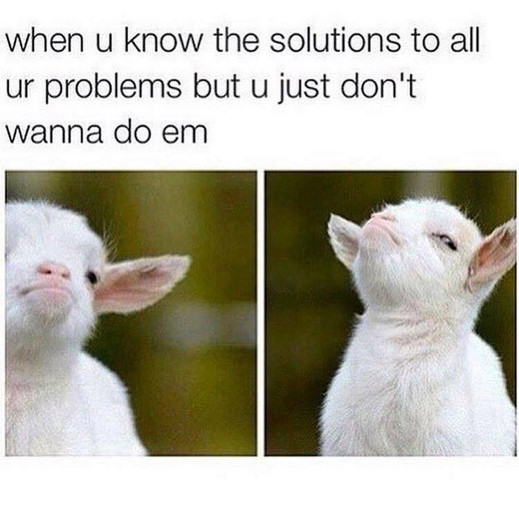 When you know the solutions to all your problems but you just don't want to solve them. Image of goat with indignant face.