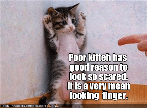 kitten finger scared mean look caption - 9028823296