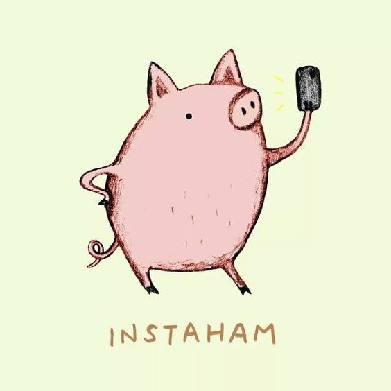 Pun cartoon of a pig holding a phone and taking an 'Instaham' selfie.