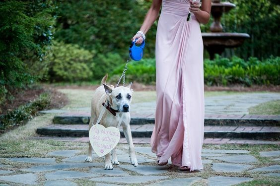 Bride walking with her dog at her wedding.
