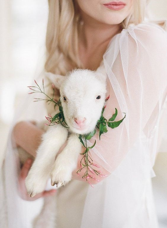 Bride holding her pet lamb at the wedding.