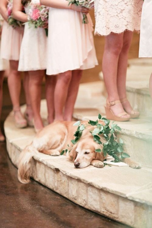 Dog sleeping at the alter at a wedding.