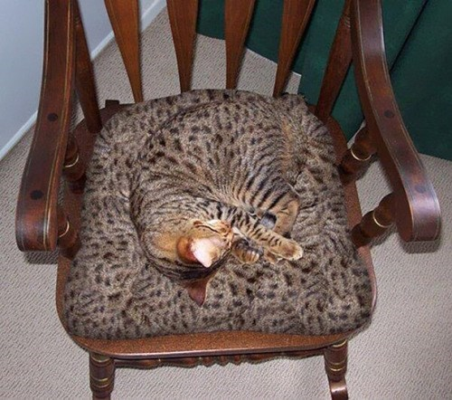 Cat is sleeping on a chair that has a pattern so similar it is hard to spot the cat on it.