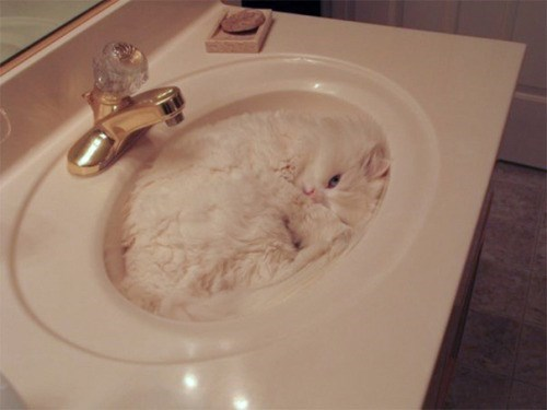 I sink I am a cat. Cat in a sink of the same color of his fur, helping him blend with the background