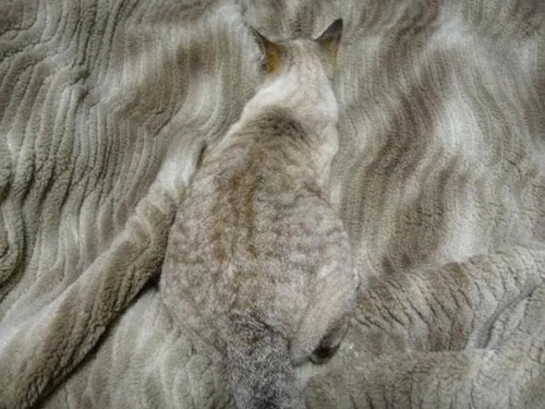 Grey cat on a grey blanket camouflaged fairly well.