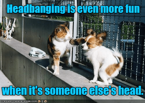 cat meme about headbanging
