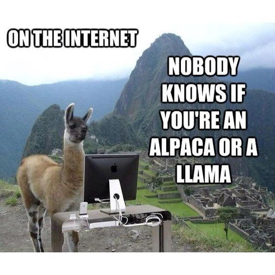 Funny meme of an alpaca acting like he is a llama in a computer in front of Machu Picchu