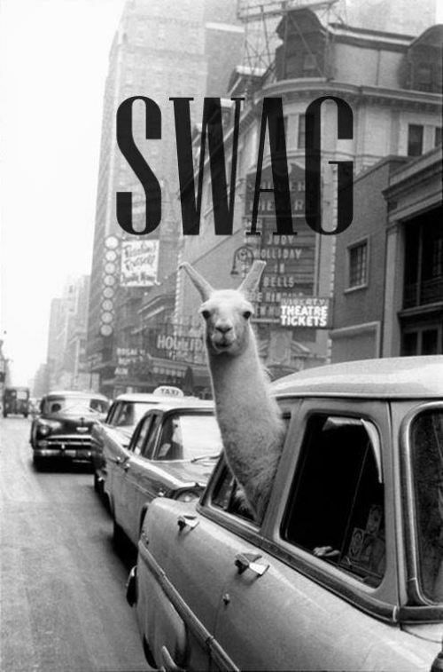 Funny picture of a llama sticking his head out a cab window with the word SWAG captioned above the llama's head.