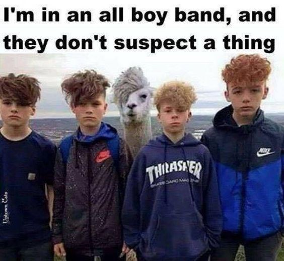 Funny picture of a llama that looks like he is in a boy band.