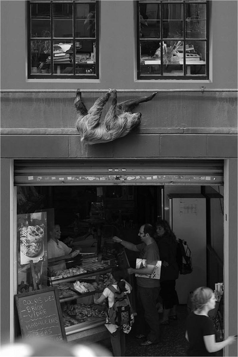 Photograph - ন Caces DE: -BRIOX VIDRE MADALEJAS S
