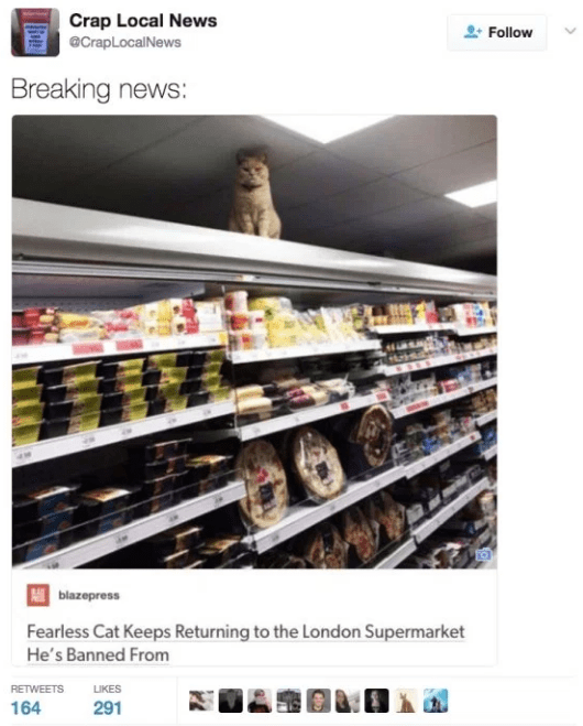 Product - Crap Local News eCrapLocalNews Follow Breaking news: blazepress Fearless Cat Keeps Returning to the London Supermarket He's Banned From RETWEETS LIKES 164 291