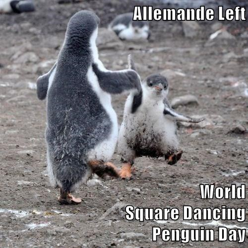 Allemande Left World Square Dancing Penguin Day I Can Has Cheezburger