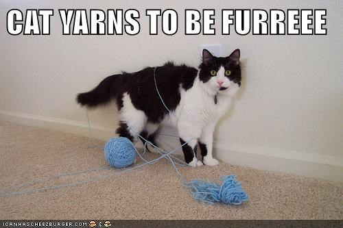 Funny cat meme of a cat all tied up with a ball of yarn he has been playing with the caption saying that he Yarns To Be FurEE.