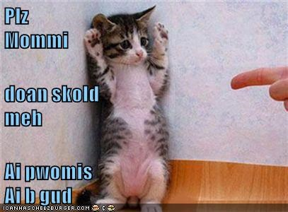 cat promise be please mommy scold dont good caption - 9029761280