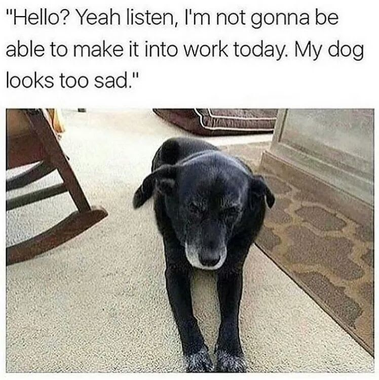 """Dog - """"Hello? Yeah listen, I'm not gonna be able to make it into work today. My dog looks too sad."""""""