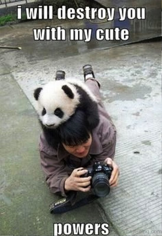 Panda - i will destroy you with my cute powers anyBeing.com