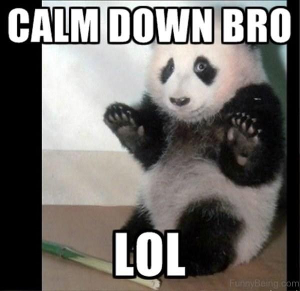 Panda - CALM DOWN BRO LOL FunnyBeing.com