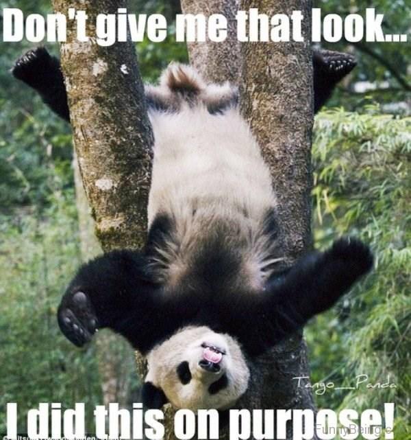 Mammal - Don't give me that loo.. Tange Pnd did thiş on purpose! Beingre