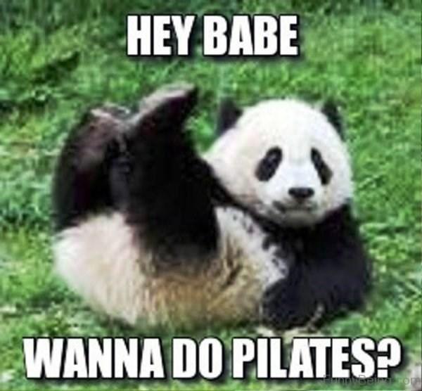 Panda - HEY BABE WANNA DO PILATES? Bel i com