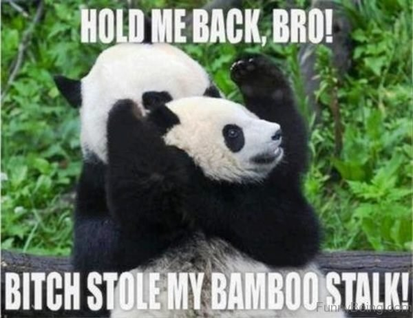 Panda - HOLD ME BACK BRO! BITCH STOLE MY BAMBO0STALK Funn&