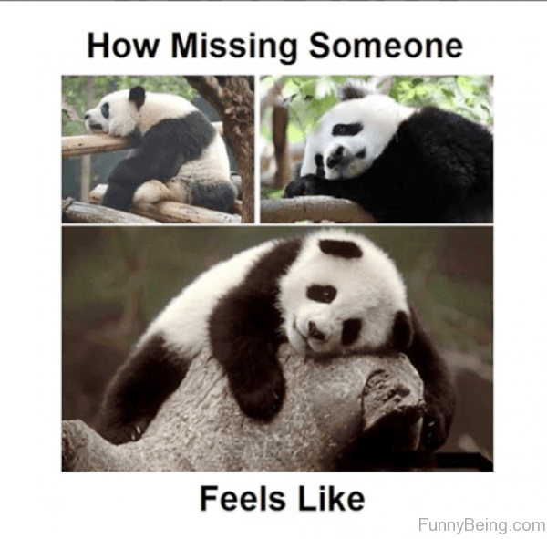 Panda - How Missing Someone Feels Like FunnyBeing.com