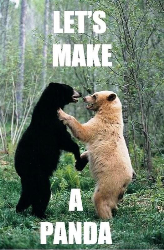 Grizzly bear - LET'S MAKE A PANDA FlnnyBeiryrocom