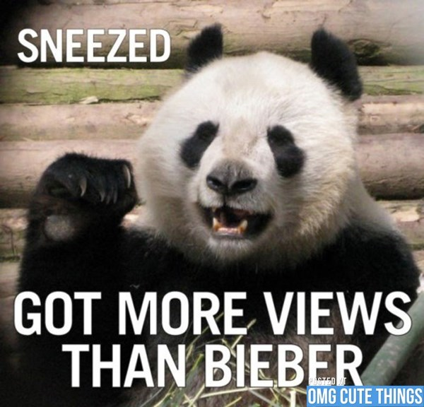 Panda - SNEEZED GOT MORE VIEWS THAN BIEBER OSTED OMG CUTE THINGS