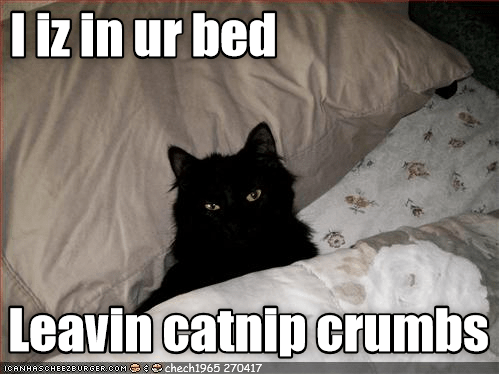 Funny picture of a black cat in the bed with the caption saying that the cat is now leaving catnip crumbs all over your sheets.