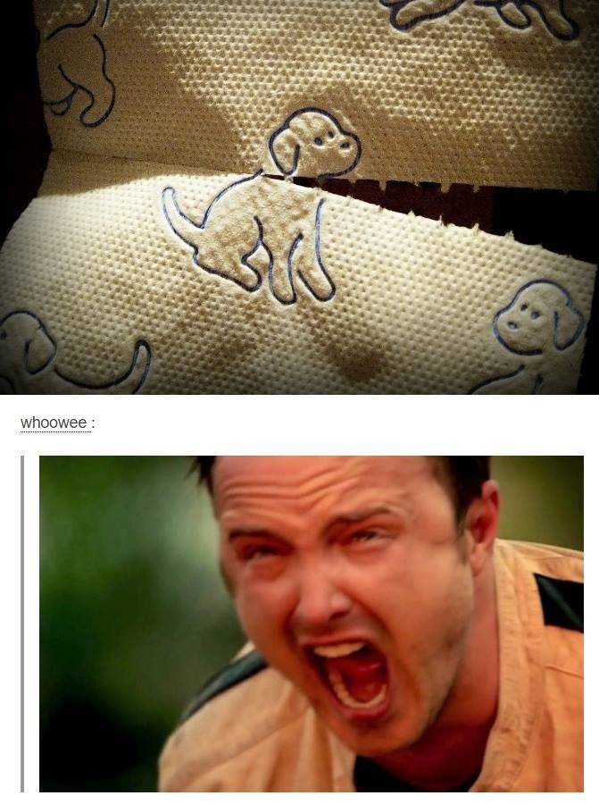 DOg paper towels, aaron paul screams no because when you rip a sheet off you decapitate the dog.